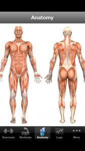 Kroppens anatomi